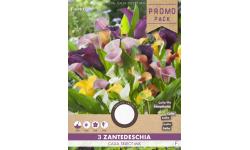 Arums (zantedeschia) en mélange
