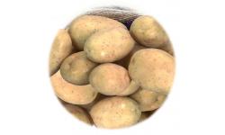 Pomme de Terre  Mélody  -  25 plants